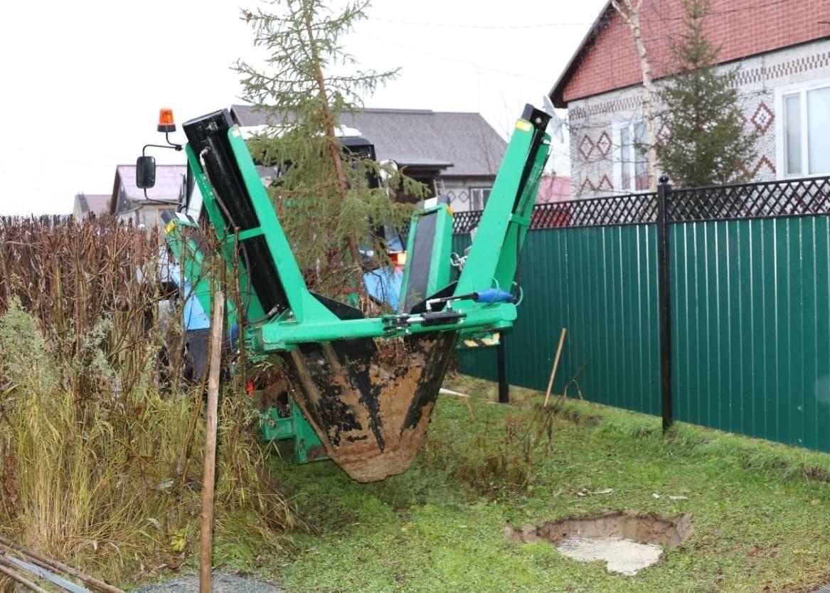 В Красноселькупе спасают деревья, растущие под ЛЭП